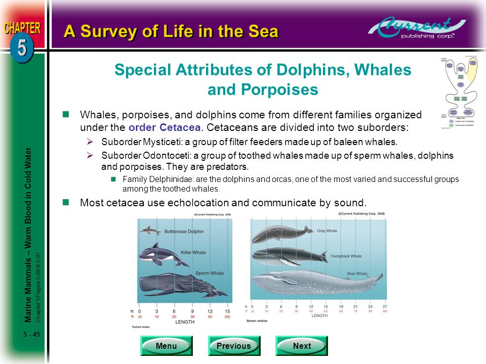 Special Attributes of Dolphins, Whales and Porpoises
