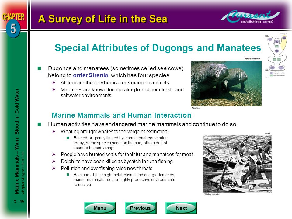 Special Attributes of Dugongs and Manatees