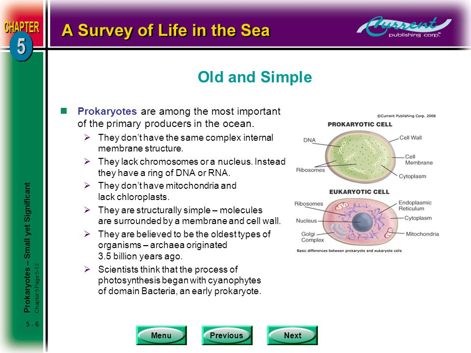Old and Simple Prokaryotes are among the most important of the primary producers in the ocean.