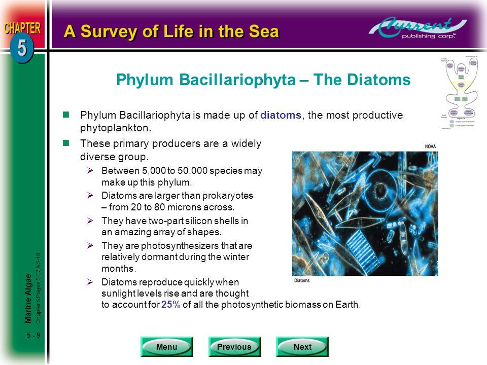 Phylum Bacillariophyta – The Diatoms
