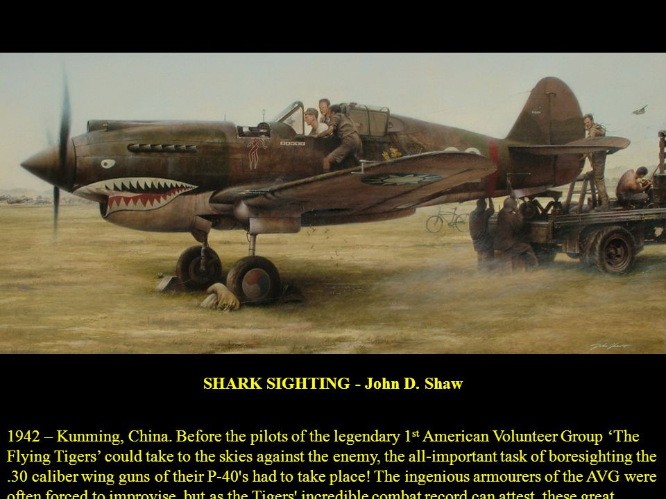 SHARK SIGHTING - John D. Shaw