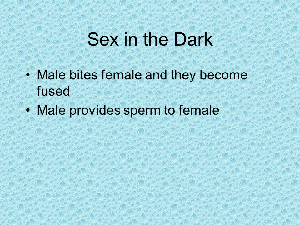 Sex in the Dark Male bites female and they become fused