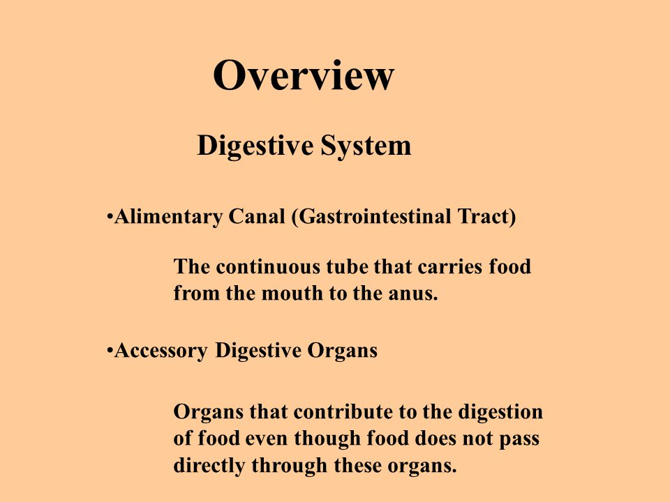 Overview Digestive System Alimentary Canal (Gastrointestinal Tract)