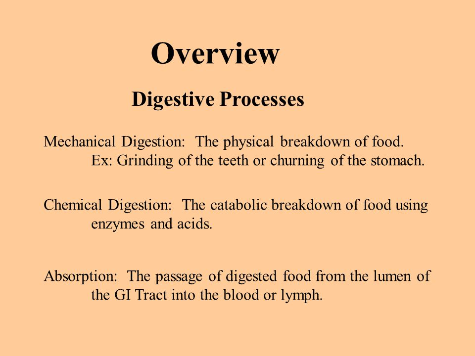 Overview Digestive Processes