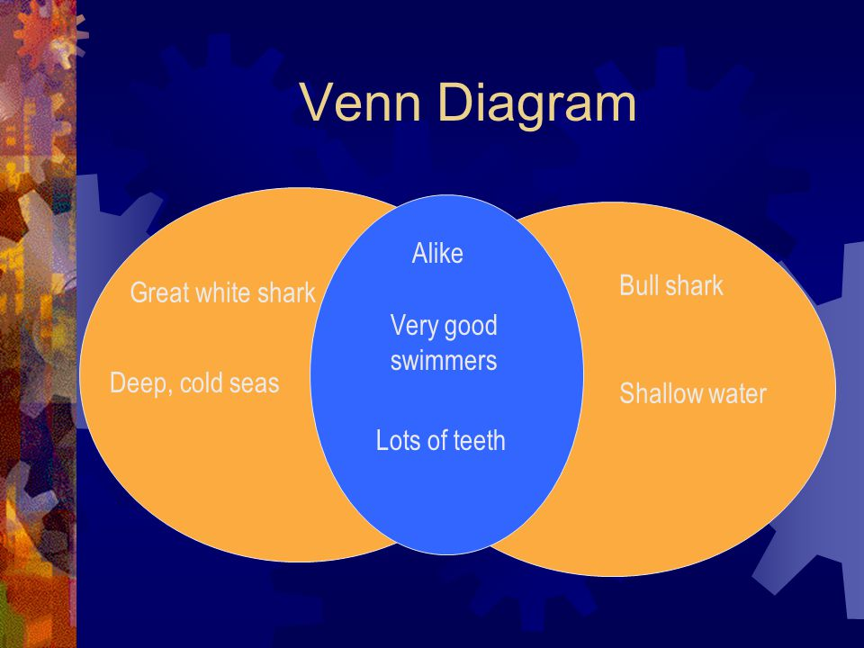Venn Diagram Alike Bull shark Great white shark Very good swimmers