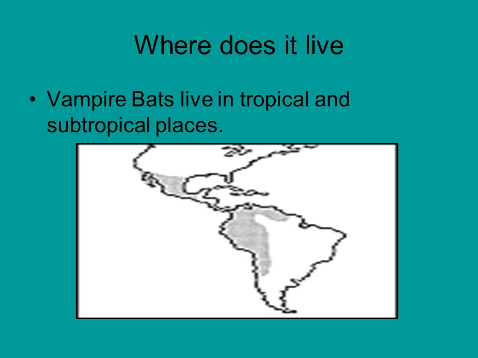 Where does it live Vampire Bats live in tropical and subtropical places.