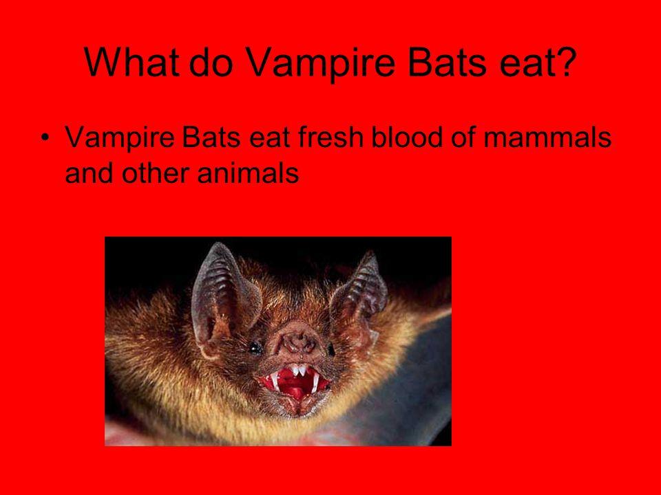 What do Vampire Bats eat