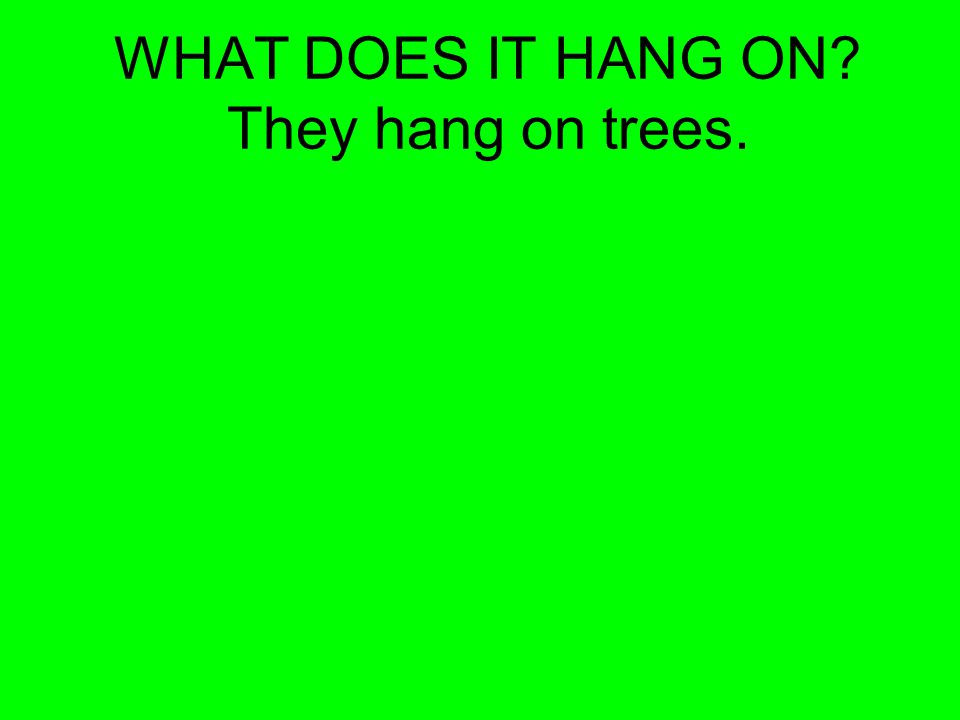 WHAT DOES IT HANG ON They hang on trees.