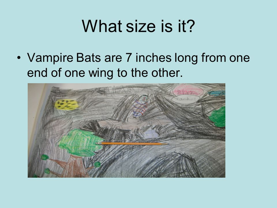 What size is it Vampire Bats are 7 inches long from one end of one wing to the other.