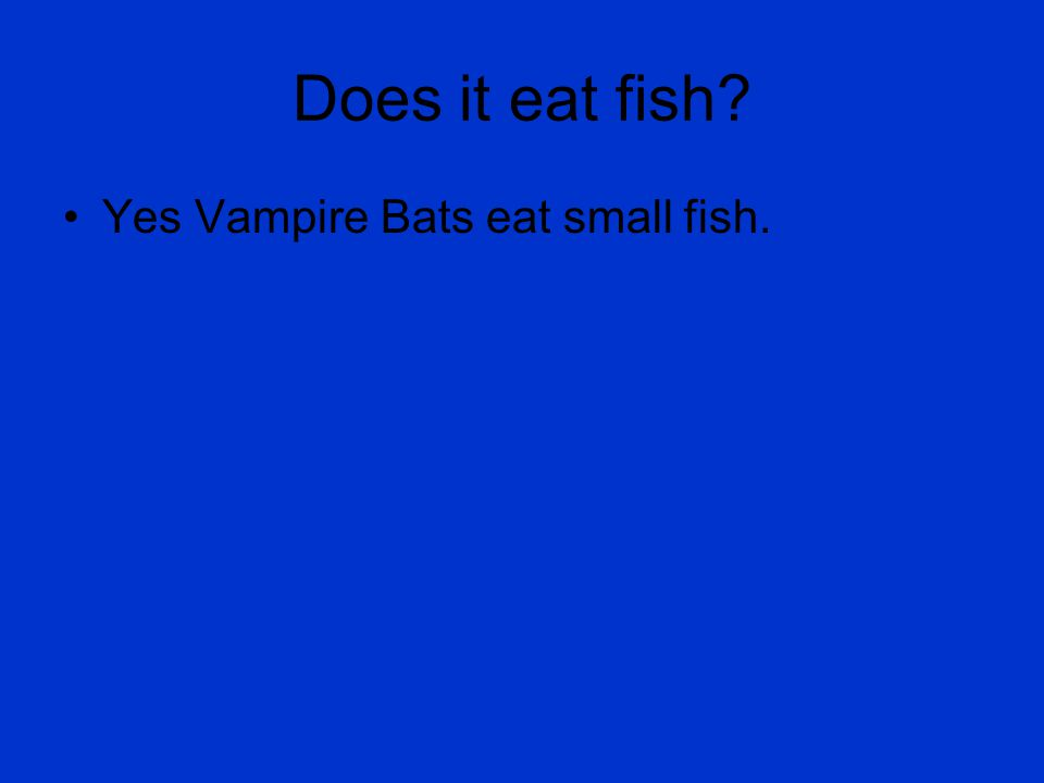 Does it eat fish Yes Vampire Bats eat small fish.