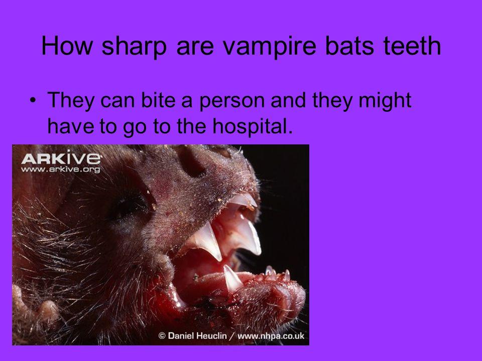 How sharp are vampire bats teeth