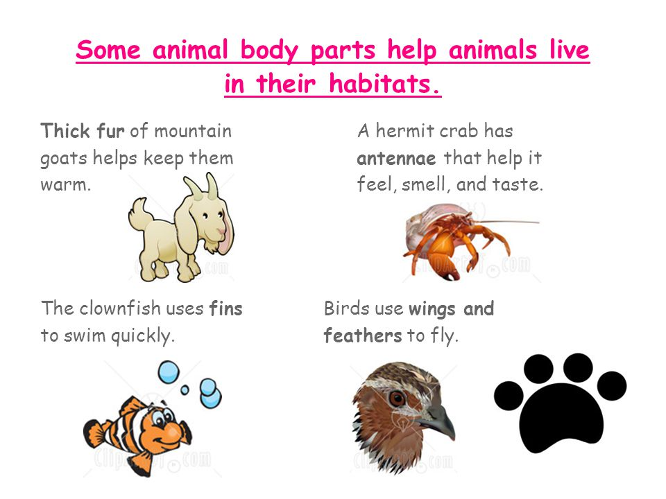 Some animal body parts help animals live