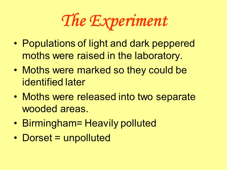 The Experiment Populations of light and dark peppered moths were raised in the laboratory. Moths were marked so they could be identified later.