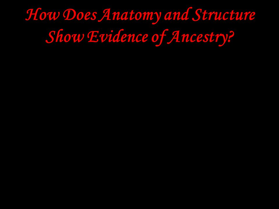 How Does Anatomy and Structure Show Evidence of Ancestry