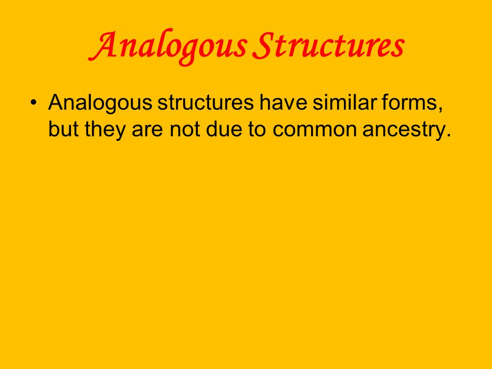 Analogous Structures Analogous structures have similar forms, but they are not due to common ancestry.