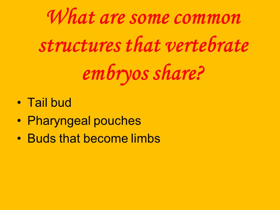 What are some common structures that vertebrate embryos share