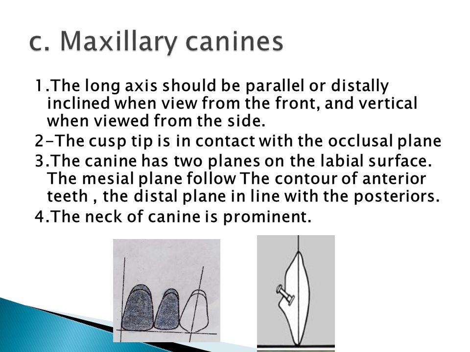 c. Maxillary canines