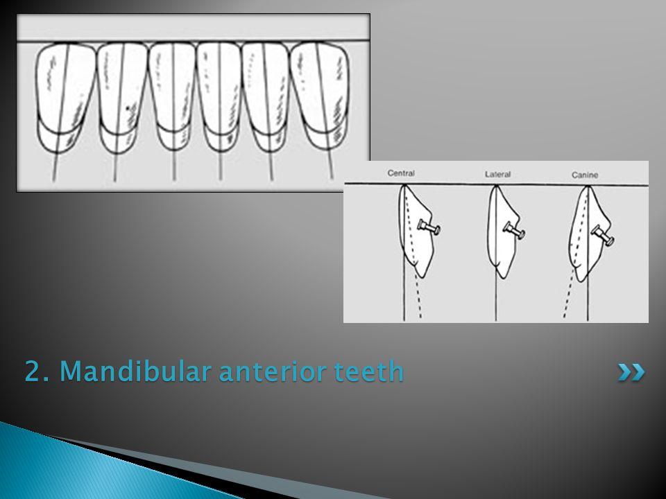 2. Mandibular anterior teeth