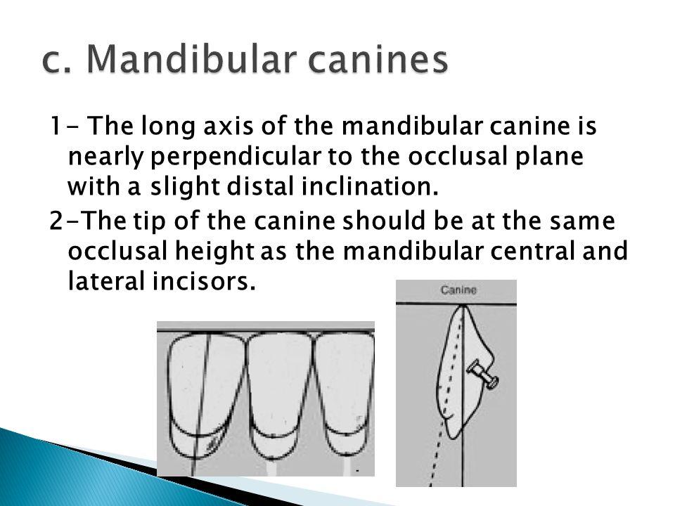 c. Mandibular canines