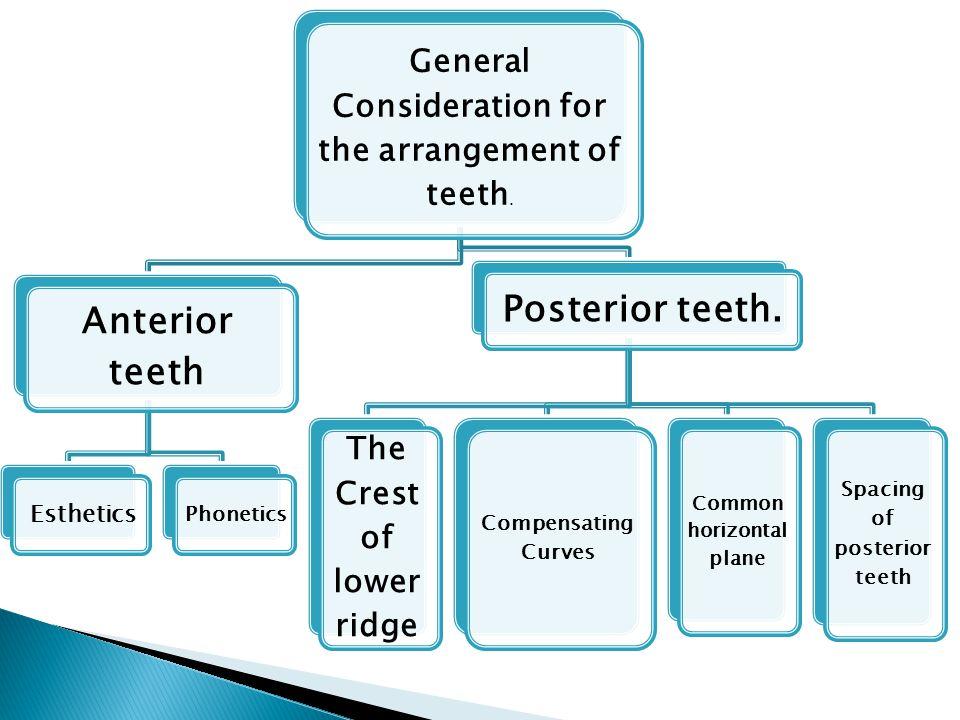 Anterior teeth Posterior teeth.