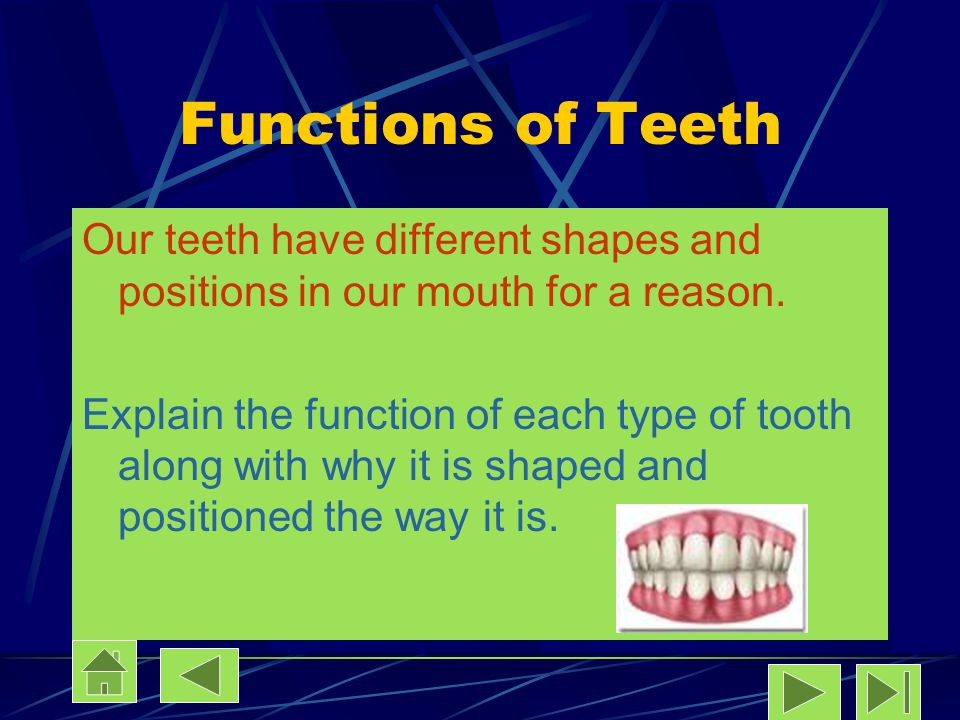 Functions of Teeth Our teeth have different shapes and positions in our mouth for a reason.