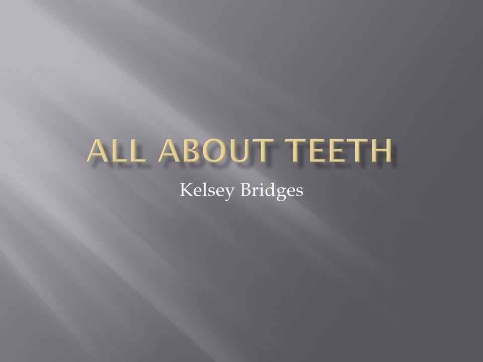 All About Teeth Kelsey Bridges