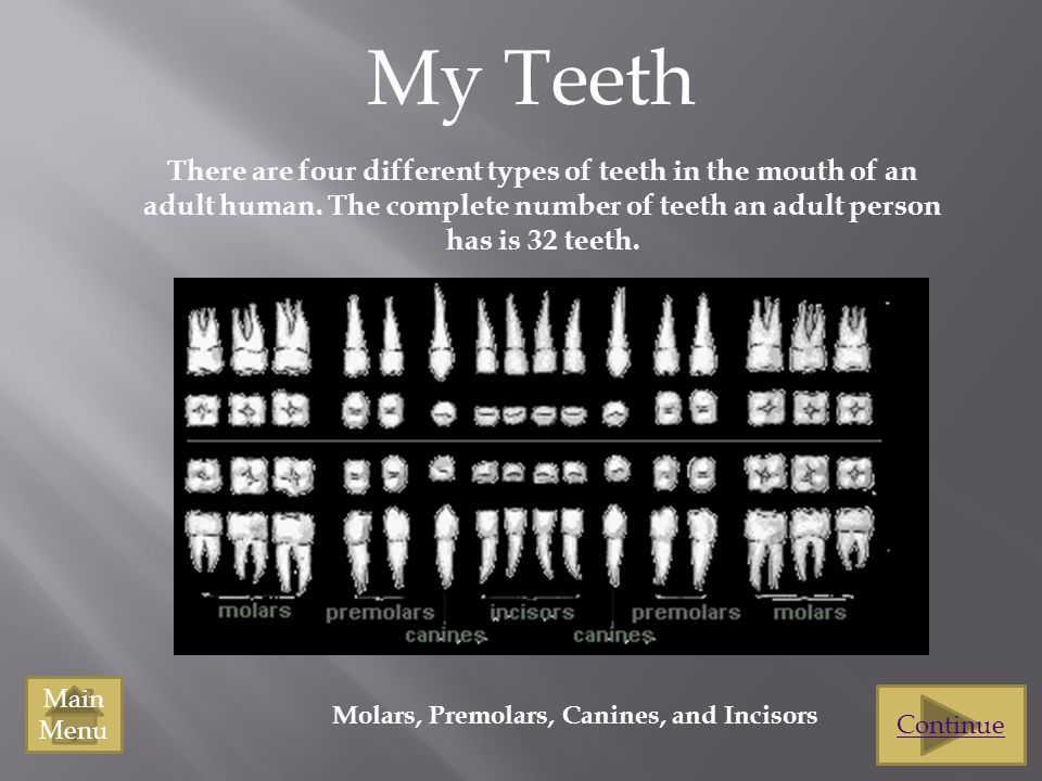 My Teeth There are four different types of teeth in the mouth of an adult human. The complete number of teeth an adult person has is 32 teeth.
