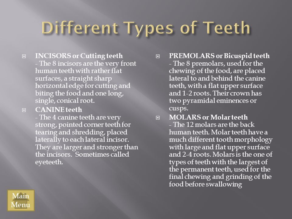 Different Types of Teeth