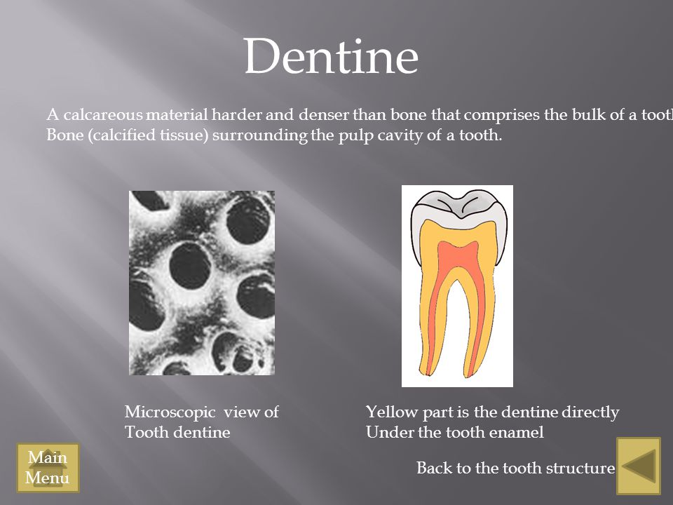 Dentine A calcareous material harder and denser than bone that comprises the bulk of a tooth.