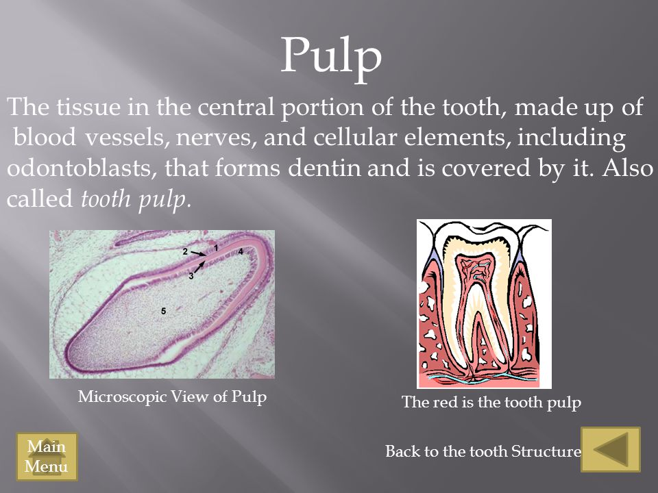 Pulp The tissue in the central portion of the tooth, made up of