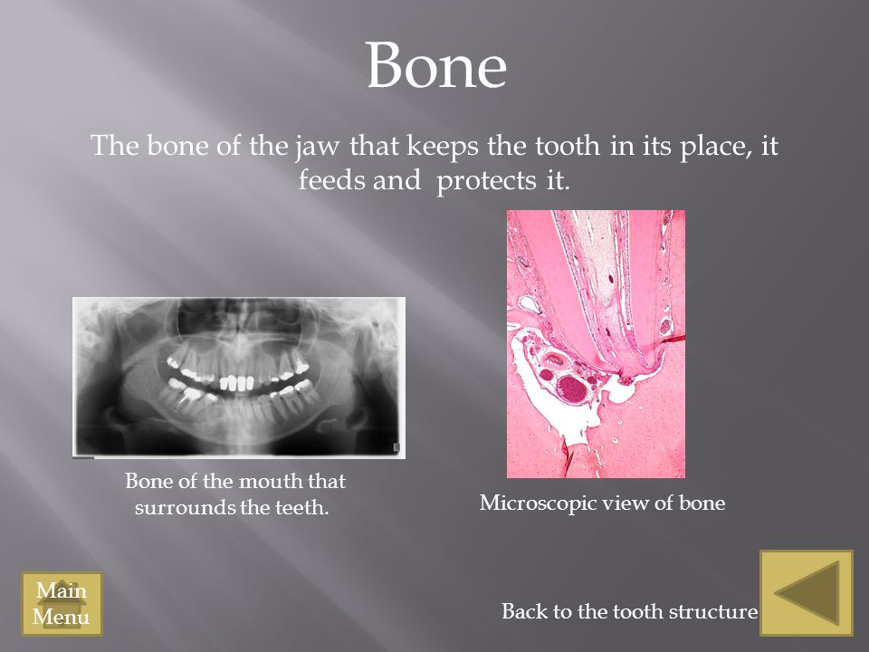 Bone The bone of the jaw that keeps the tooth in its place, it feeds and protects it. Bone of the mouth that.