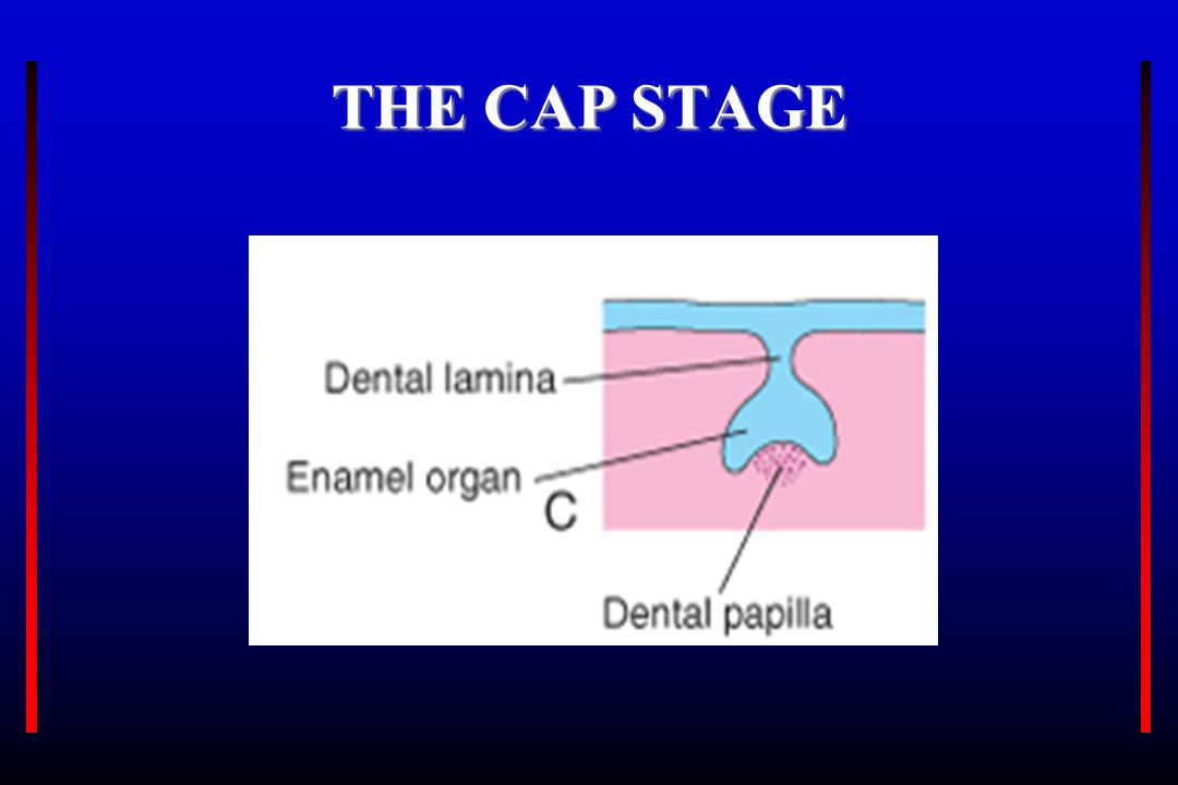 THE CAP STAGE