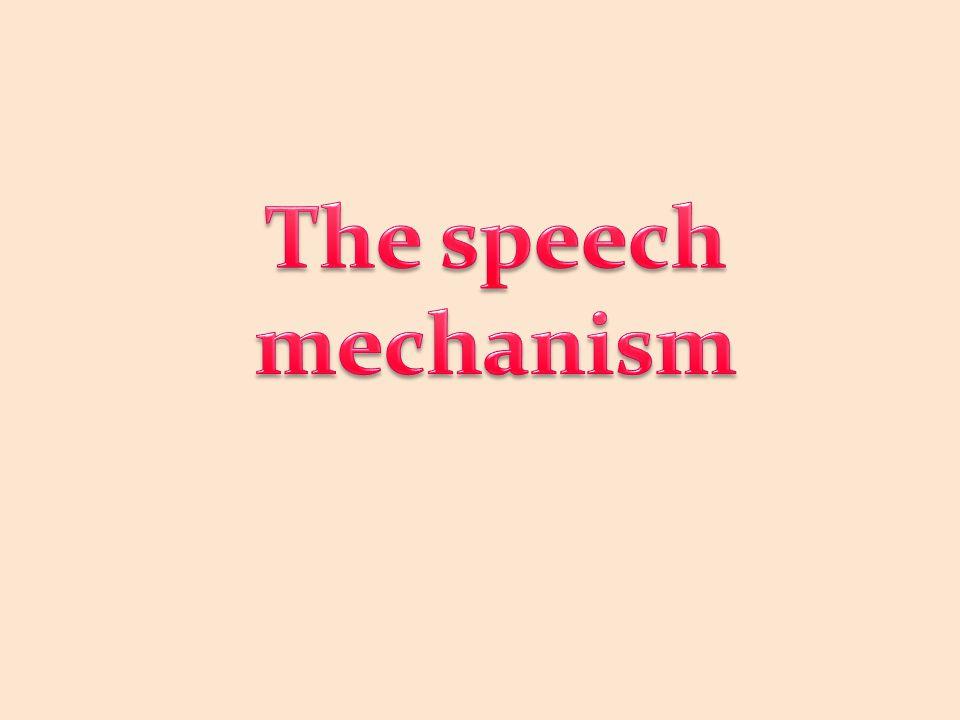 The speech mechanism