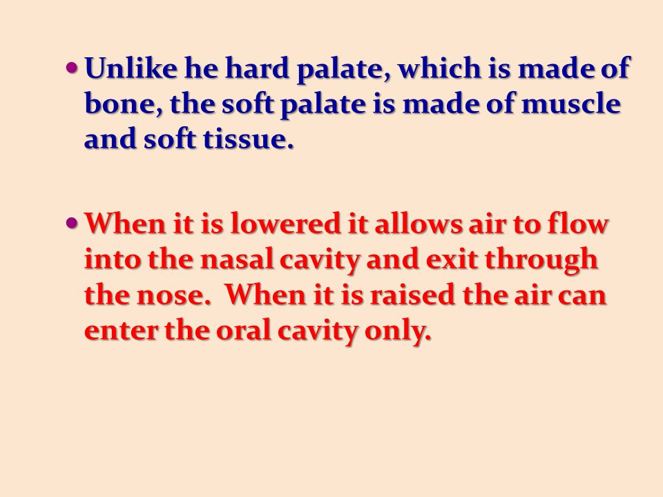 Unlike he hard palate, which is made of bone, the soft palate is made of muscle and soft tissue.