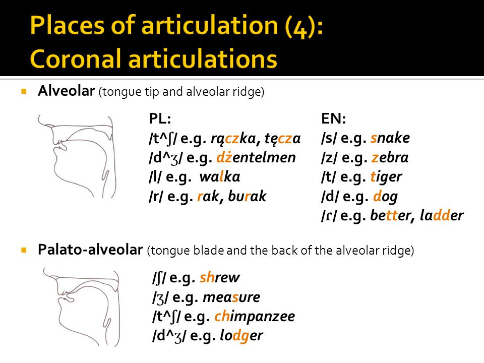 Places of articulation (4): Coronal articulations