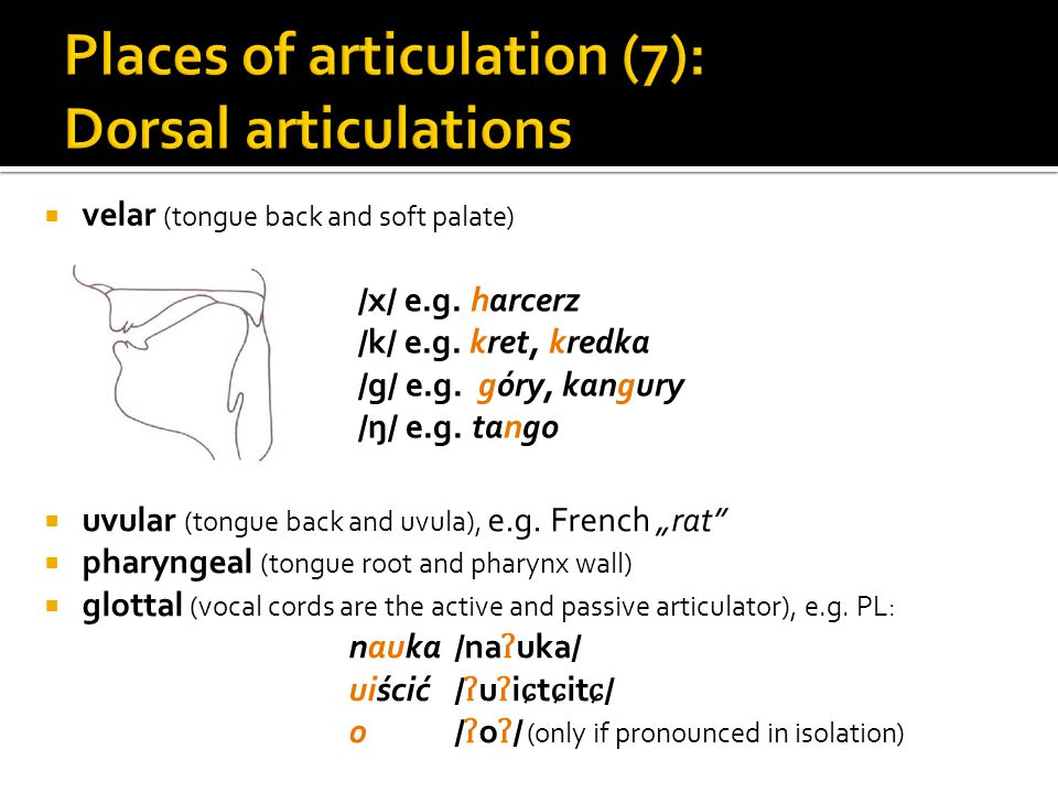 Places of articulation (7): Dorsal articulations