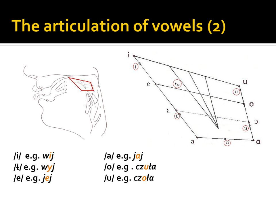 The articulation of vowels (2)