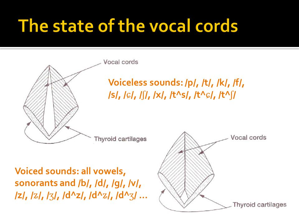 The state of the vocal cords