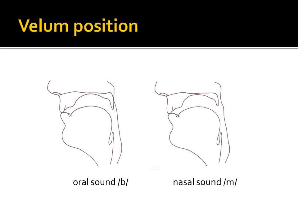 Velum position oral sound /b/ nasal sound /m/