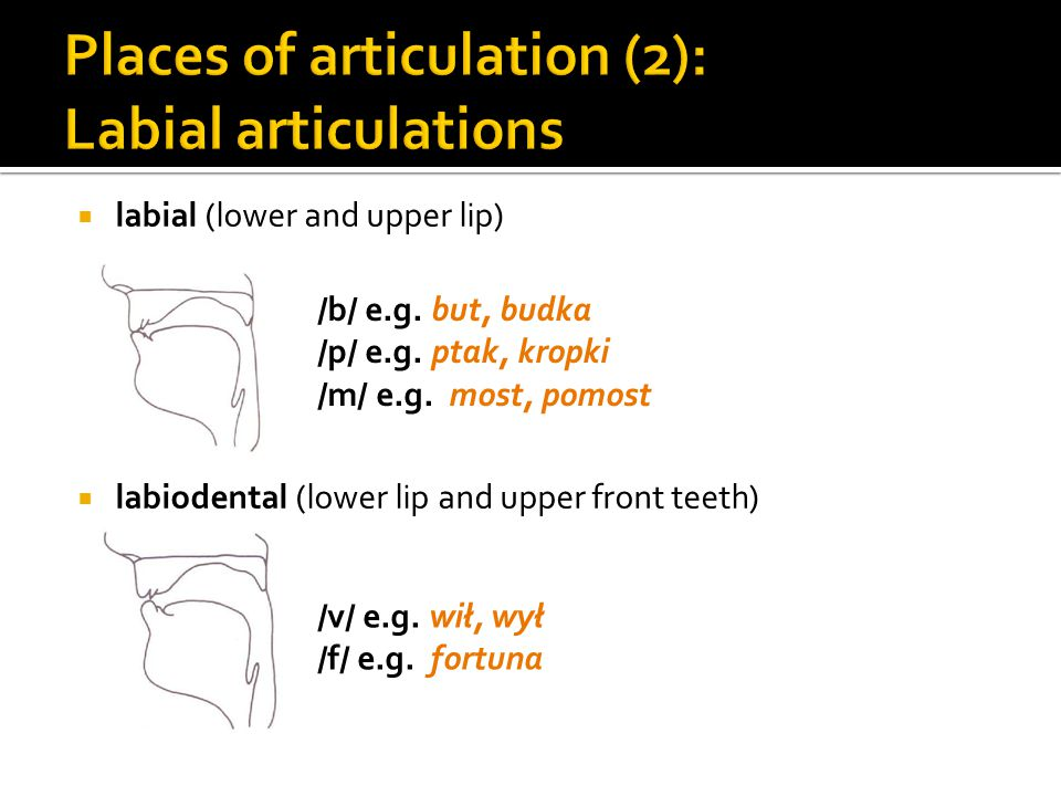 Places of articulation (2): Labial articulations