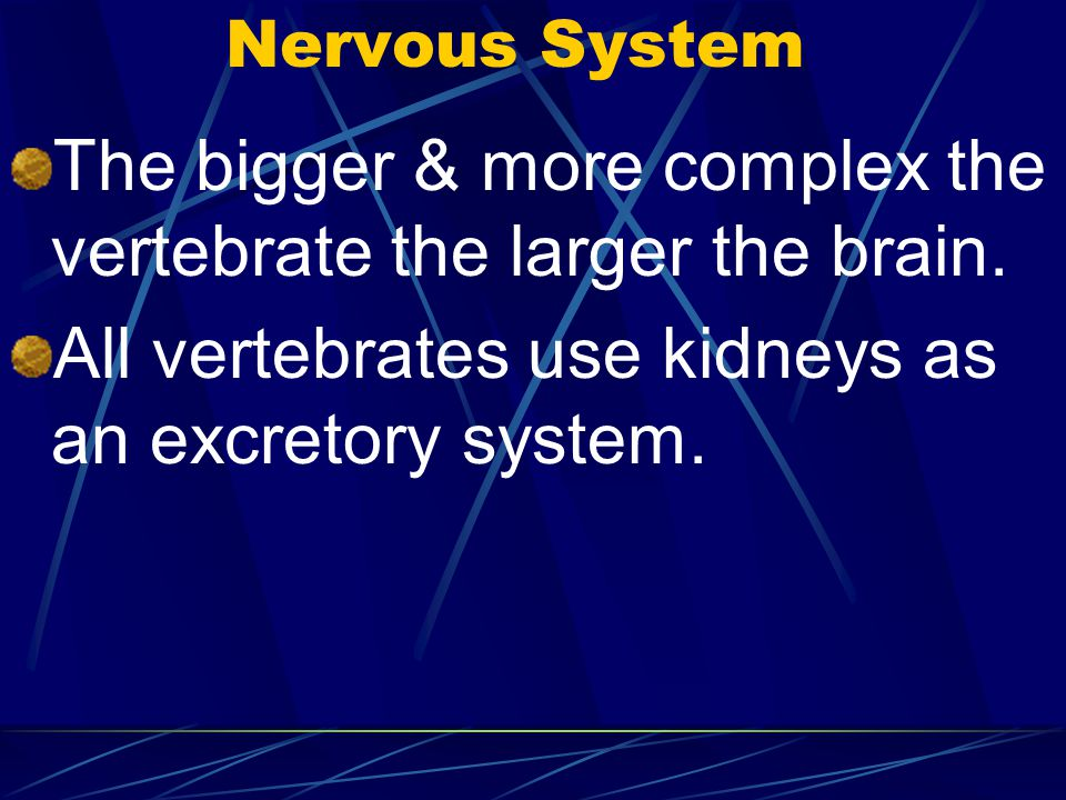 The bigger & more complex the vertebrate the larger the brain.