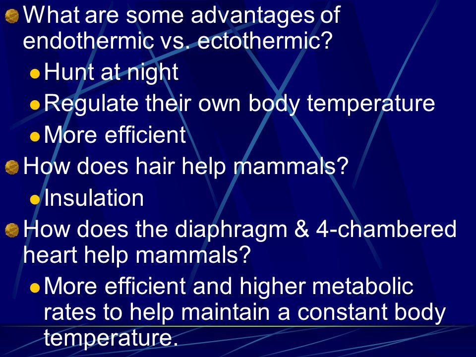 What are some advantages of endothermic vs. ectothermic