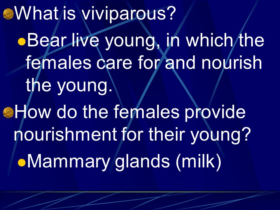 What is viviparous Bear live young, in which the females care for and nourish the young. How do the females provide nourishment for their young