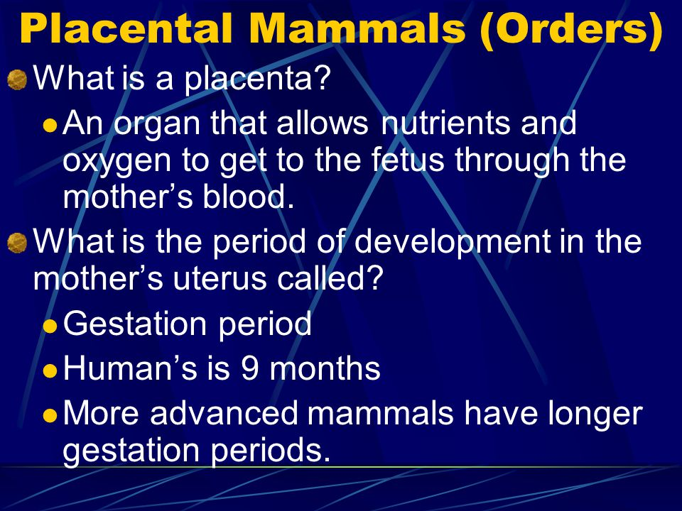 Placental Mammals (Orders)