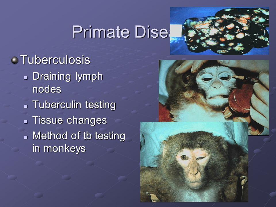 Primate Diseases Tuberculosis Draining lymph nodes Tuberculin testing
