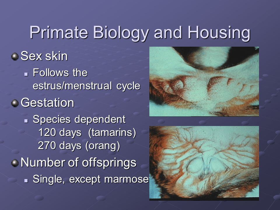 Primate Biology and Housing