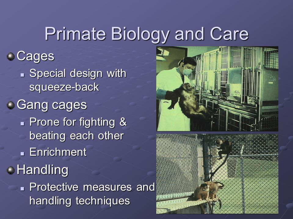Primate Biology and Care