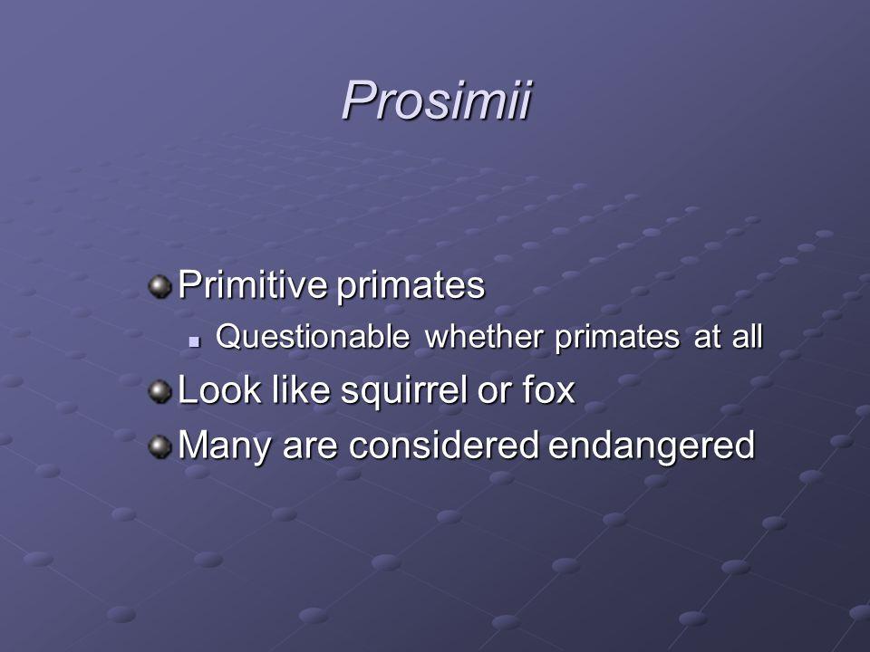 Prosimii Primitive primates Look like squirrel or fox
