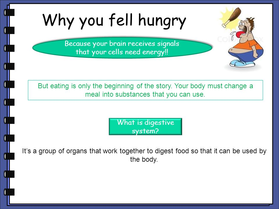 Why you fell hungry Because your brain receives signals that your cells need energy!!