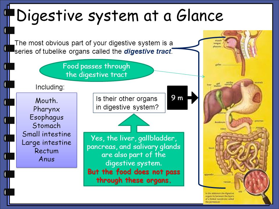 Digestive system at a Glance